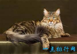 2017最可爱的猫排行榜前十名 孟加拉猫最可爱