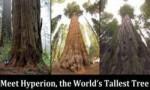 世界上最高的树排行前十名 亥伯龙神排第一