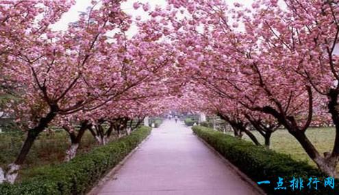 武汉旅游景点排名 第一居然是一所学校