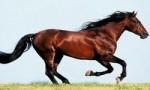 世界上跑得最快的马 纯血马速度达19米/秒 堪称短跑界的神话
