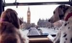 世界上最暖心的观光巴士 来自伦敦的宠物巴士