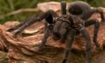 世界上最恐怖的十大食肉动物 第一名竟然是它!