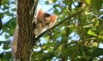 世界十大最可爱动物 小猫占据第一名!