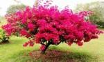 世界十大热带雨林植物 样子千奇百怪的植物