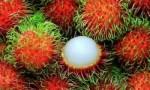世界上最好吃的十种水果 很多人都没见过这些水果