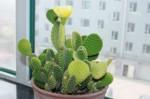 最好养的室内大型盆栽 最好养的室内大型盆栽有哪些
