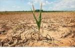 世界上最干旱的城市排名 最严重的一年才下一次雨
