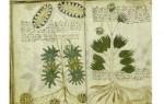 世界十大未解之谜排行 伏尼契手稿至今无人能阅读