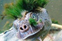 世界十大有趣的动物 乌龟能用屁股呼吸
