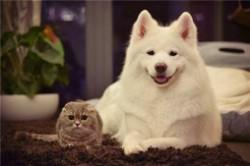 最萌的狗狗排行榜 什么狗狗最可爱最萌