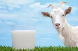 2019十大羊奶粉品牌排行榜  佳贝艾特羊奶粉最受认可