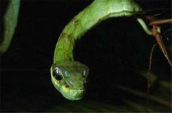 全球十大最奇怪的昆虫 长得像小蛇一样的毛毛虫你见过吗