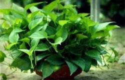 适合办公室的十种绿植排名 办公室养什么绿植好