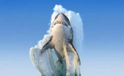 地球十大可怕海洋生物 每一种都能轻易夺走人的性命