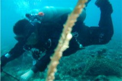 男子关掉潜友气瓶 受害者潜水前曾遭到威胁