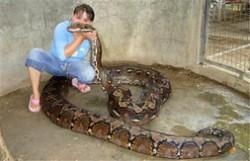 女子遭巨蟒勒颈身亡 事发现场共有140条蛇
