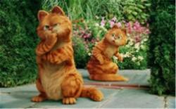 十大最可爱猫咪排行榜 加菲猫仅排第二