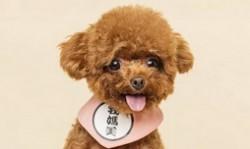 小型宠物狗的品种名称大全 最受欢迎的小型宠物犬排名