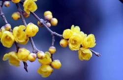 十大最耐寒的花卉 冬季最耐寒好养的花