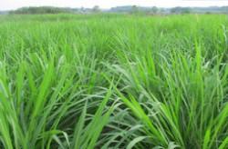 牧草品种大全 中国最好的十大牧草