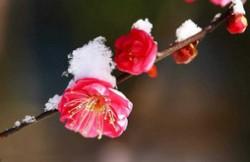中国传统十大名花 牡丹竟仅排第二