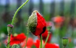 全球十大毒花排行榜 世界上最妖娆最毒的花