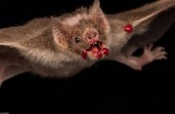 十大最恐怖蝙蝠图片 世界上最可怕的蝙蝠