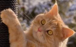 中国十大家猫品种大全 中国家猫有哪些品种