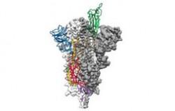 新冠病毒原子图  未来18个月疫苗或将诞生