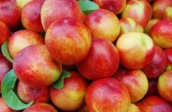 国内十大最好的油桃品种 什么油桃大又甜品种好