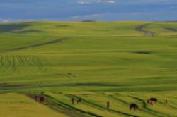 中国最大的草原 呼伦贝尔草原面积约一亿四千九百万亩