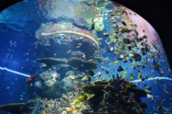 世界上最大的水族馆 乔治亚水族馆鱼类种类:3000多种