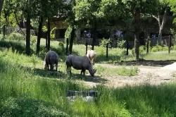 盘点世界十大最佳动物园排行,野生动物园模式是第七!