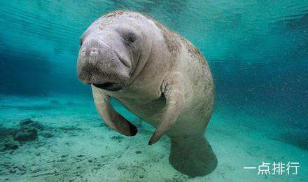 盘点世界十大最丑海洋生物,奇怪的知识增加了